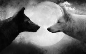 wild-wolf-live-hd-wallpaper-2-0-s-307x512