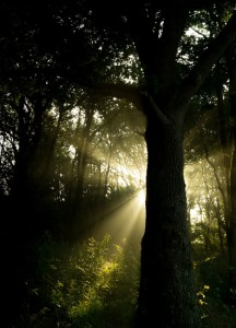 forest-ray-of-sunshine-sunbeams-large