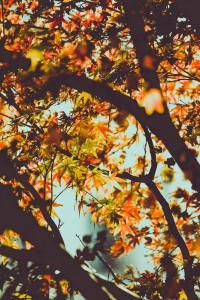 fall-logan-adermatt-pumpkinspice-fallvibes