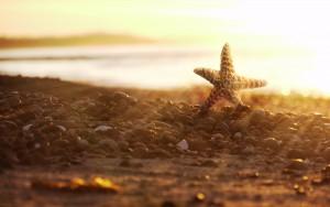 pink-starfish-on-beach-wallpaper-2